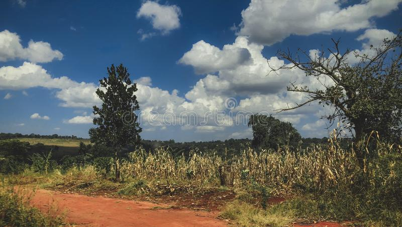 Landscape in Uganda. A unique photo of a landscape in Uganda. Great for travel photos royalty free stock photos