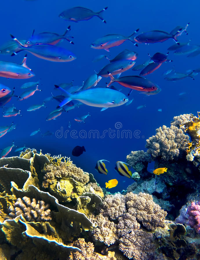 Landscape under water stock photography