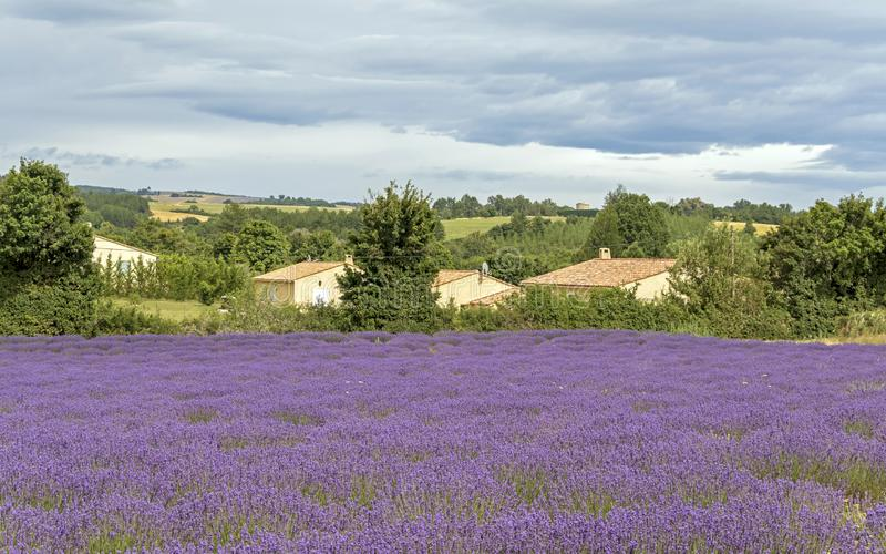 Landscape with vibrant purple Lavender field and typical village of Southern France in distance at blooming season royalty free stock photography
