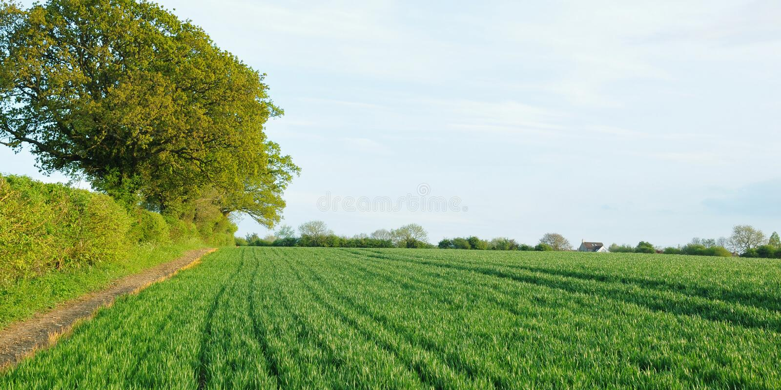 Download Landscape View Of Crops On Farmland Stock Image - Image: 20403121