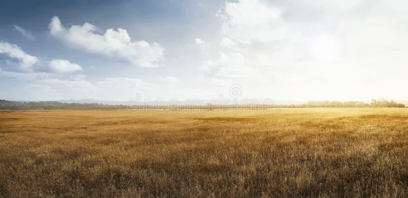 Landscape view of dry savanna stock photos