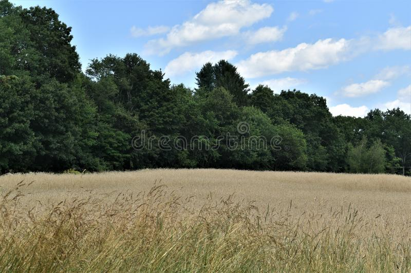 The General Field in Summer, Town of Groton, Middlesex County, Massachusetts, United States. Landscape view of The General Field Recreation Ground during a royalty free stock image