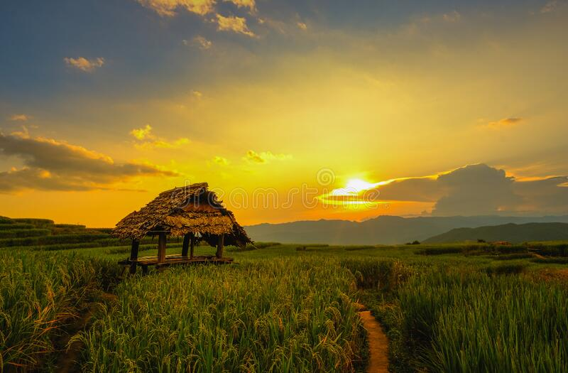 Landscape view of green terraced rice field in Pa Pong Pieng , Mae Chaem, Chiang Mai, Thailand stock photo
