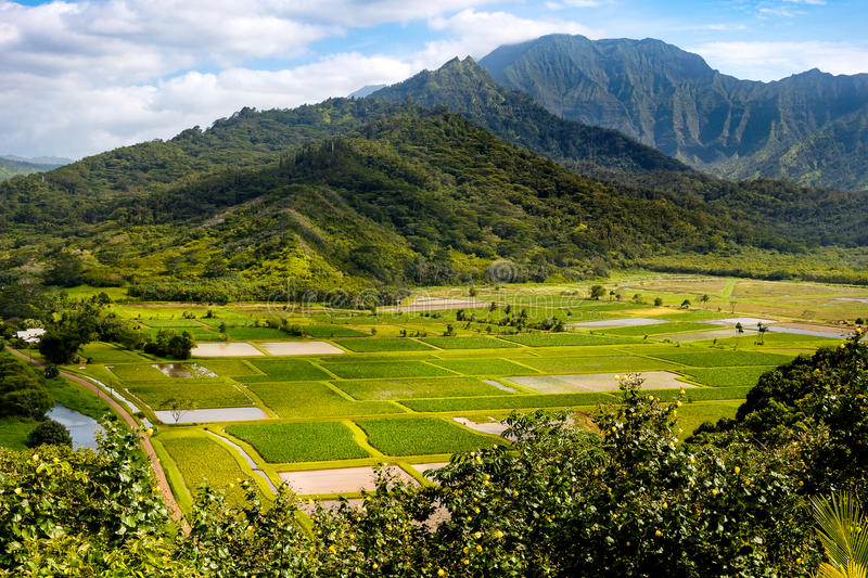 Landscape view of Hanalei valley and green taro fields, Kauai stock images