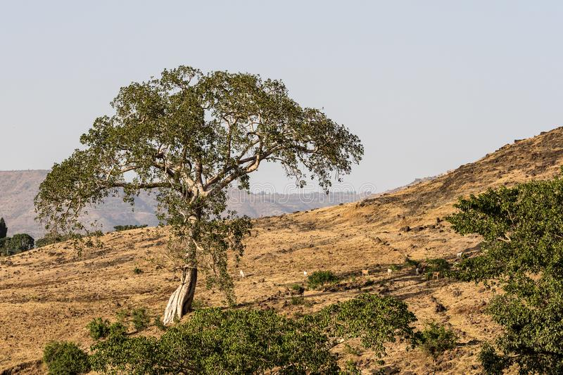 Landscape view near the Blue Nile falls, Tis-Isat in Ethiopia, Africa. Landscape view near the Blue Nile falls, Tis-Isat Falls, meaning great smoke in Amharic in royalty free stock images