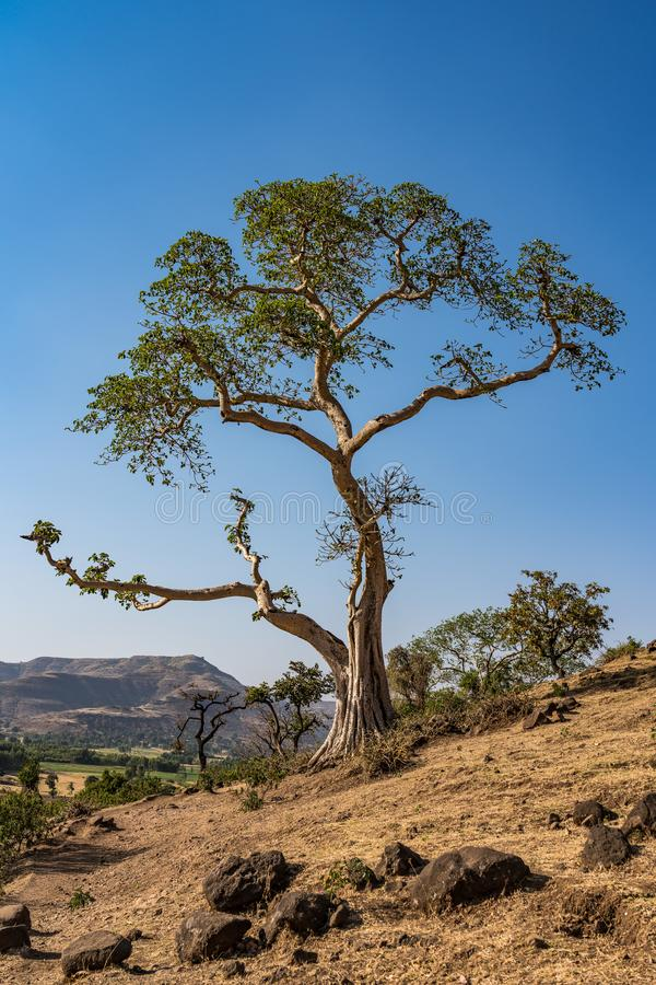 Landscape view near the Blue Nile falls, Tis-Isat in Ethiopia, Africa. Landscape view near the Blue Nile falls, Tis-Isat Falls, meaning great smoke in Amharic in royalty free stock photos