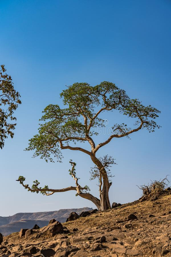 Landscape view near the Blue Nile falls, Tis-Isat in Ethiopia, Africa. Landscape view near the Blue Nile falls, Tis-Isat Falls, meaning great smoke in Amharic in stock photo