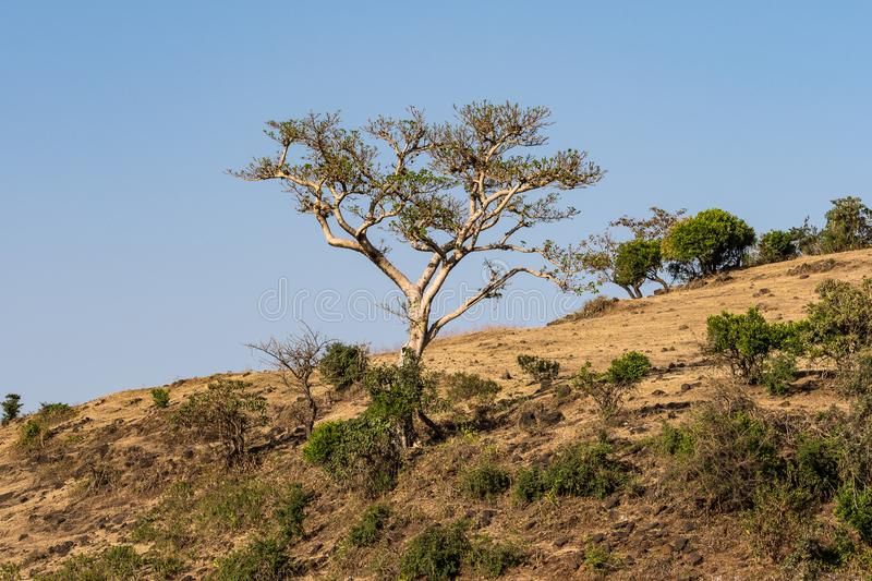Landscape view near the Blue Nile falls, Tis-Isat in Ethiopia, Africa. Landscape view near the Blue Nile falls, Tis-Isat Falls, meaning great smoke in Amharic in stock photography