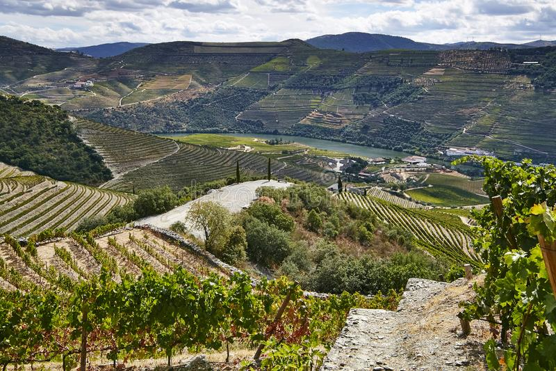 Landscape view on the old vineyards and river with red wine grapes. stock image