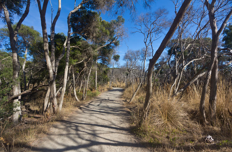 Landscape view of path in the outback bush of Australia stock photography