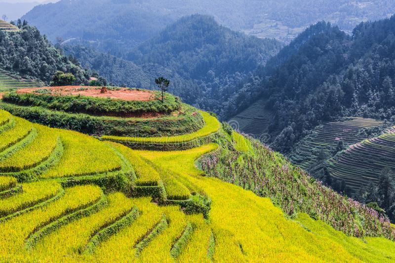 Landscape view of rice fields in Mu Cang Chai District, VIetnam. Landscape view of rice fields in Mu Cang Chai District, Yen Bai Province, North Vietnam stock images
