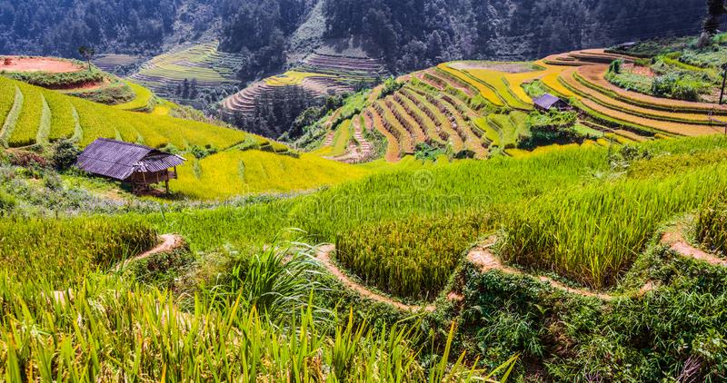 Landscape view of rice fields in Mu Cang Chai District, VIetnam. Landscape view of rice fields in Mu Cang Chai District, Yen Bai Province, North Vietnam stock photography