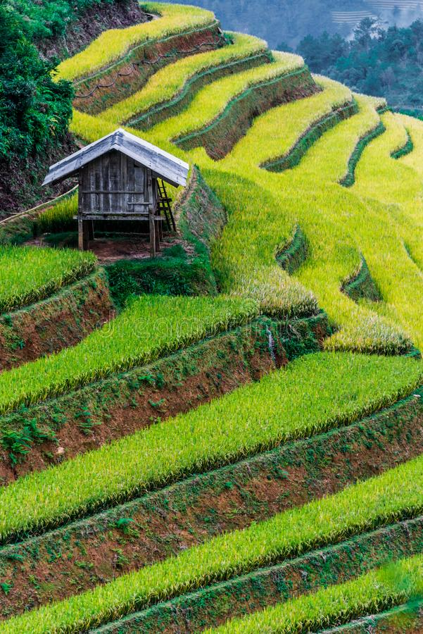Landscape view of rice fields in Mu Cang Chai District, VIetnam. Landscape view of rice fields in Mu Cang Chai District, Yen Bai Province, North Vietnam stock photo