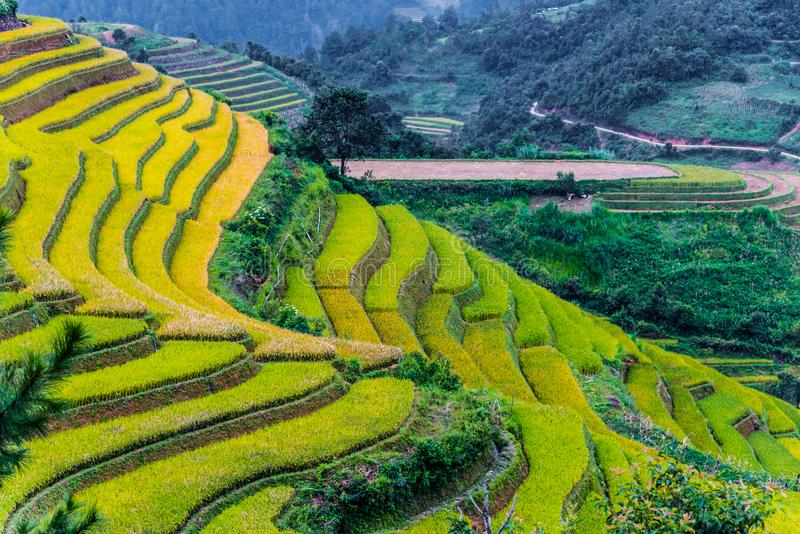 Landscape view of rice fields in Mu Cang Chai District, VIetnam. Landscape view of rice fields in Mu Cang Chai District, Yen Bai Province, North Vietnam stock image