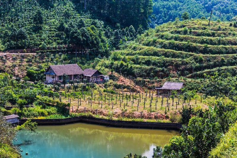 Landscape view of rice fields in Mu Cang Chai District, VIetnam. Landscape view of rice fields in Mu Cang Chai District, Yen Bai Province, North Vietnam royalty free stock images