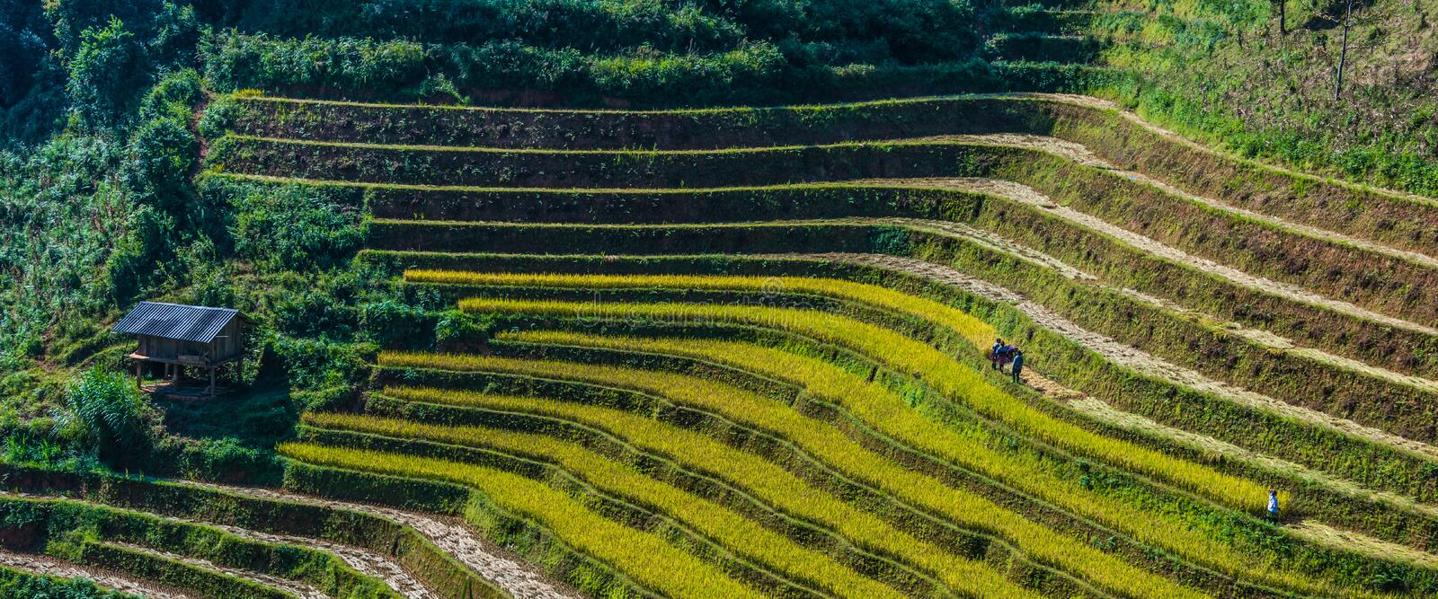 Landscape view of rice fields in Mu Cang Chai District, VIetnam. Landscape view of rice fields in Mu Cang Chai District, Yen Bai Province, North Vietnam stock photos