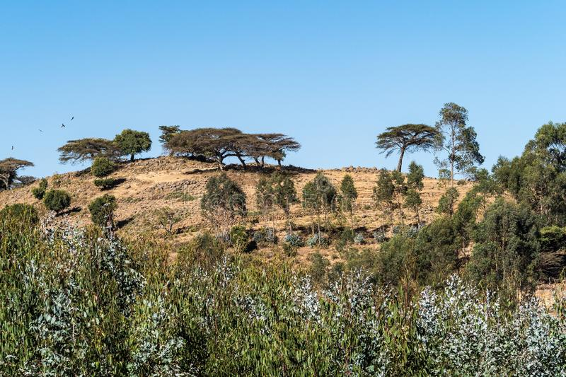 Landscape view between Gondar and the Simien mountains, Ethiopia, Africa. Landscape view on the road from Gondar to the Simien mountains, Noth Ethiopia, Africa royalty free stock photo