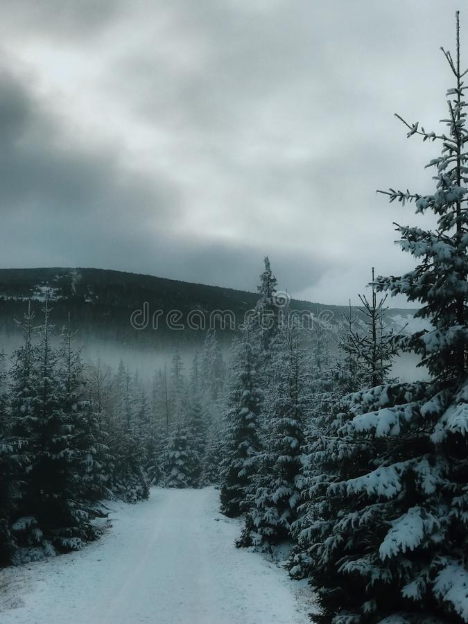 Landscape view of snow-covered species in Karpacz during a snowstorm and blizzard. View of the snow forest. stock photos