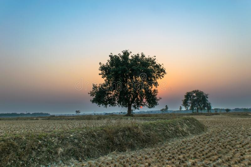 Landscape view of the tree in the blue hour royalty free stock images