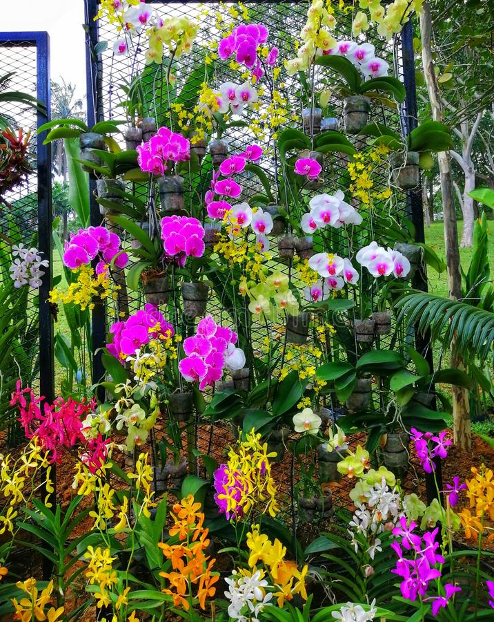 Landscape view various kind of beautiful orchids at botanical garden royalty free stock photography