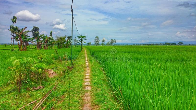 Landscape village at field royalty free stock image