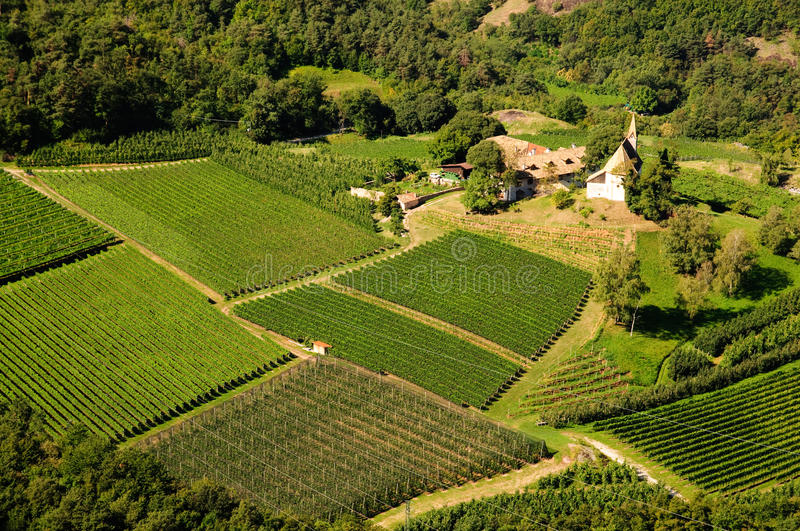 Landscape - Vineyard and apple tree stock photography