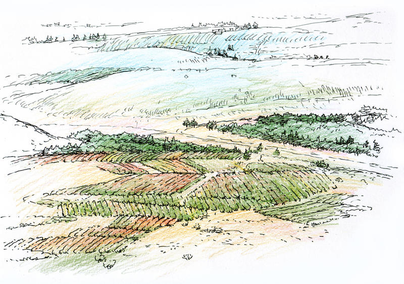 Landscape with vineyard. Architectural drawing stock illustration