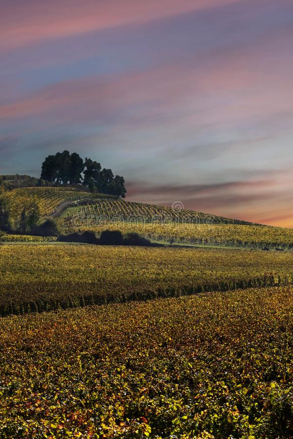 Landscape of vineyards royalty free stock photos