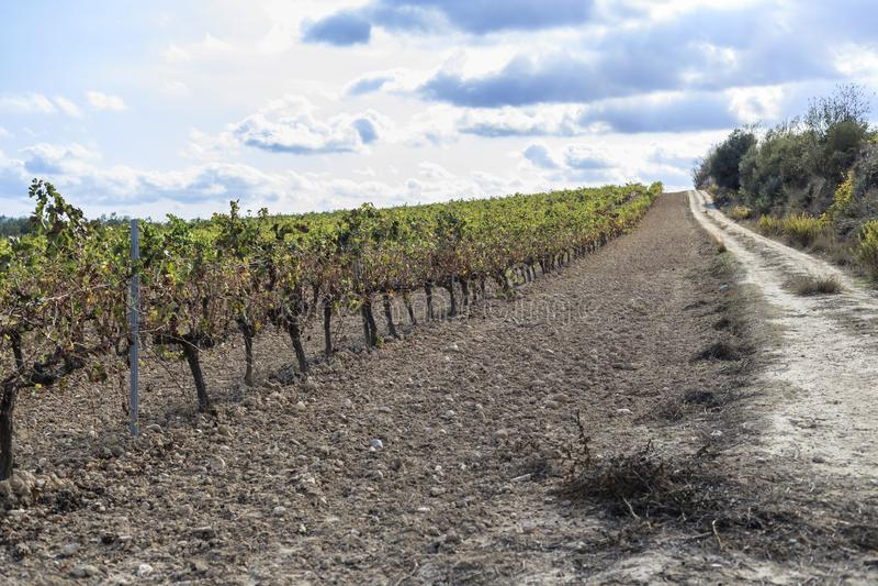 Landscape with vineyards in Penedes,wine cava region,Vilafranca. Del Penedes,Catalonia,Spain royalty free stock image