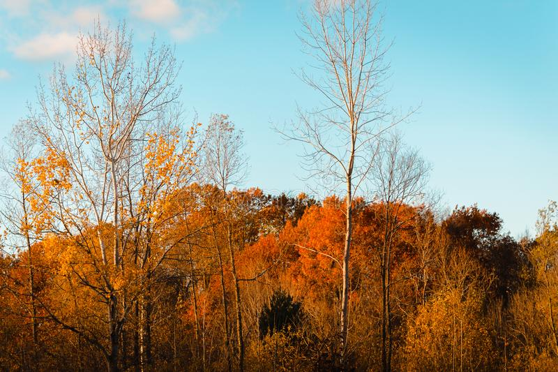 Landscape of Wahlfield Park near Grand Rapids Michigan. On an autumn day stock photography