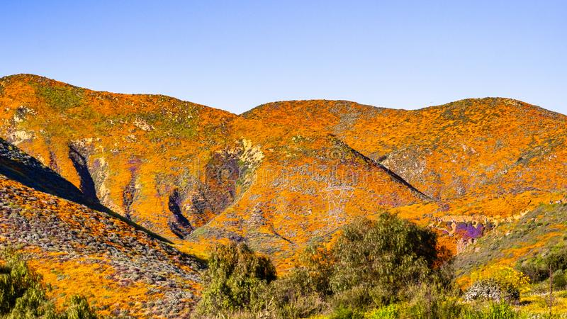 Landscape in Walker Canyon during the superbloom, California poppies covering the mountain valleys and ridges, Lake Elsinore,. South California royalty free stock photography