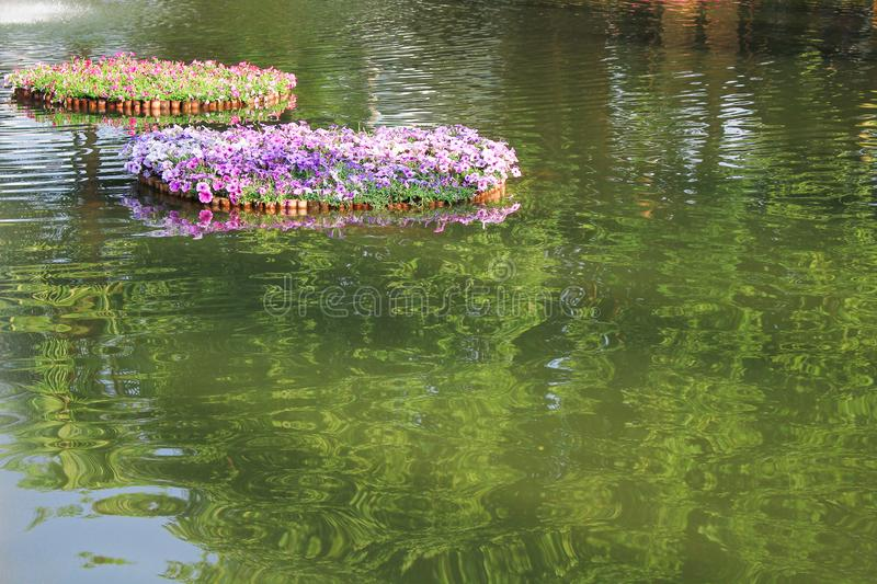 Landscape water in park with colorful petunia flowers patterns with green leaves blooming in bamboo raft stock photos