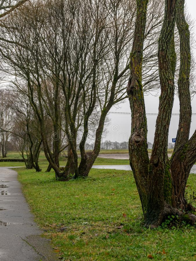 Landscape with wet and dirty country road, naked tree silhouettes, rainy and misty autumn day stock photo
