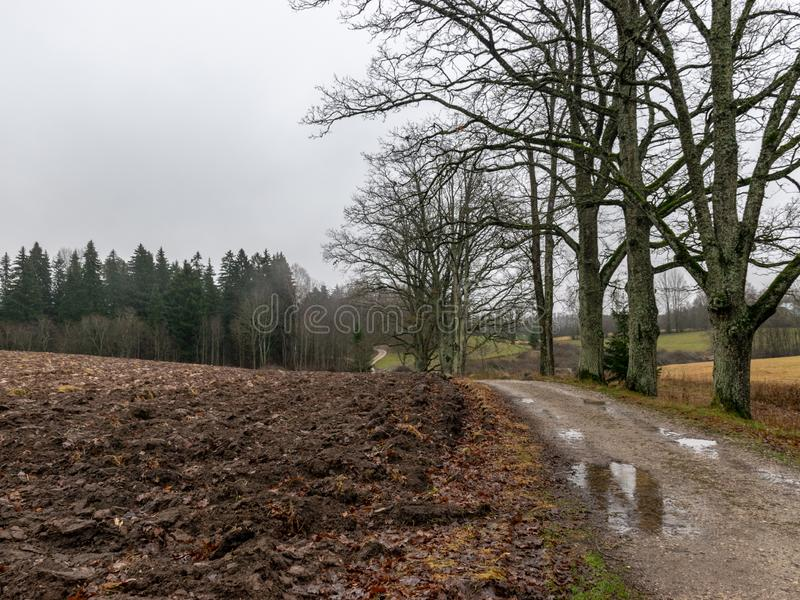 Landscape with wet and dirty country road, naked tree silhouettes, rainy and misty autumn day stock image