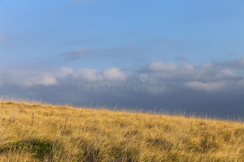 Landscape of a wheat meadow. Spain. View of a wheat meadow with no people in the shot in the Island of Minorca. Spain royalty free stock photos