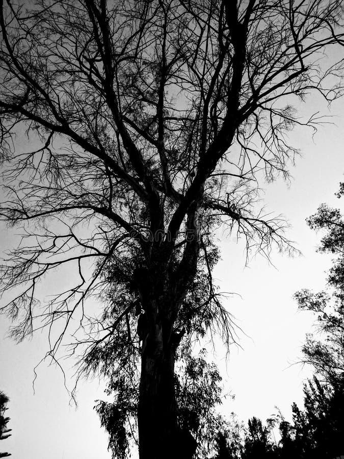 The dark tree royalty free stock photo