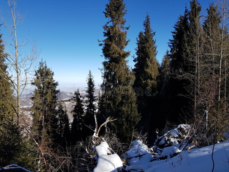 White snow in a mountain forest. Landscape with white snow in a mountain forest on a winter day royalty free stock image