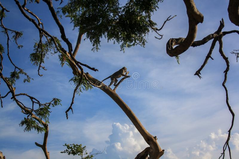 A landscape of winding trees and a monkey preparing to jump royalty free stock images