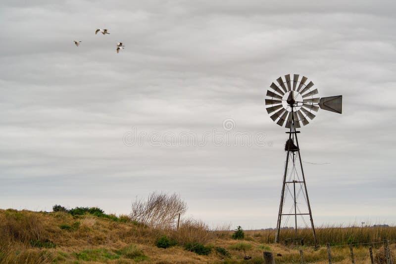 Landscape with windmill, Pampas, cordova, Argentina. Cows. Landscape with windmill, Pampas, cordova, Argentina, cows. Landscape in the pampa stock photos