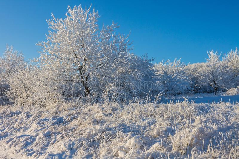 Landscape with winter covered with snow trees. Winter beatiful landscape stock photo