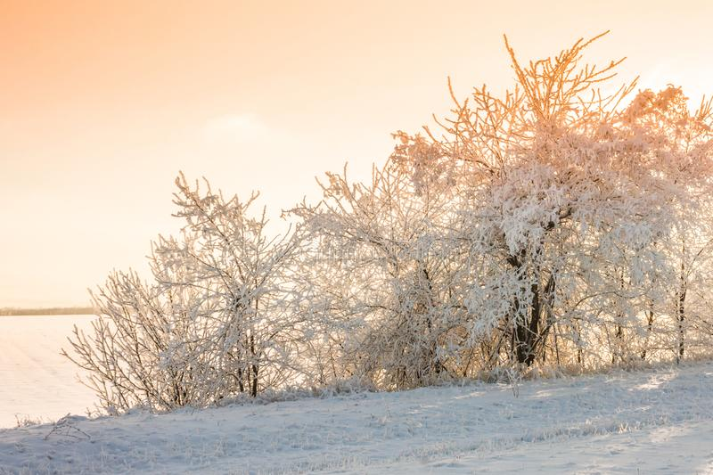 Landscape with winter covered with snow trees. Winter beatiful landscape stock photos