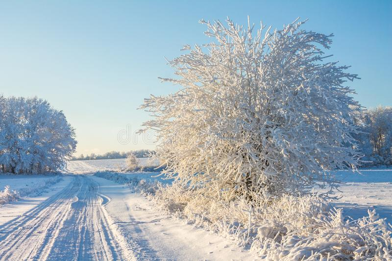 Landscape with winter covered with snow trees. Winter beatiful landscape royalty free stock photo