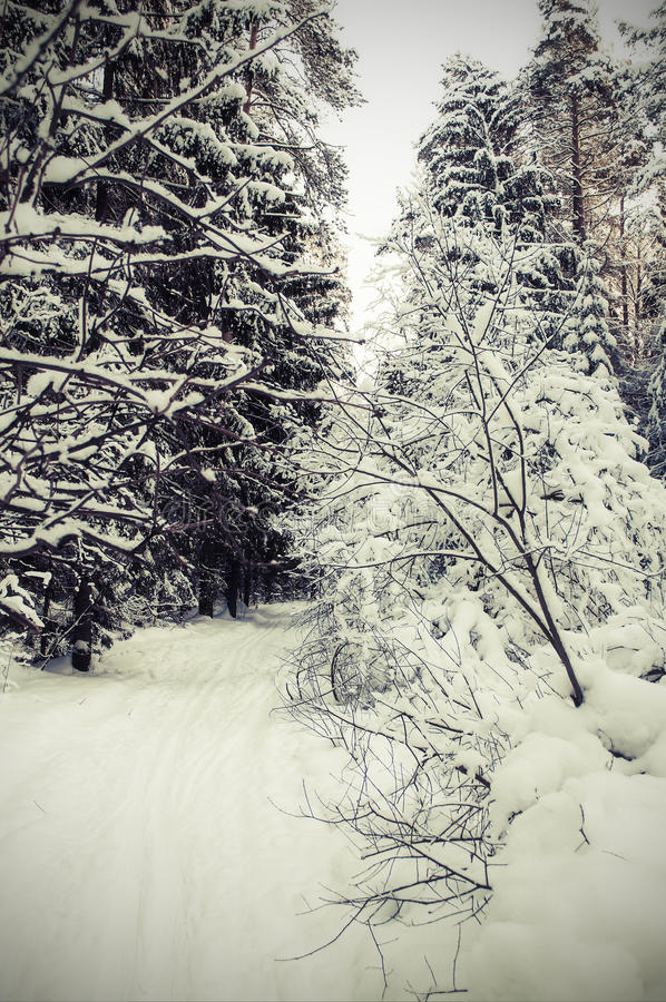 Download Landscape Of Winter Forest. Stock Image - Image: 36977823
