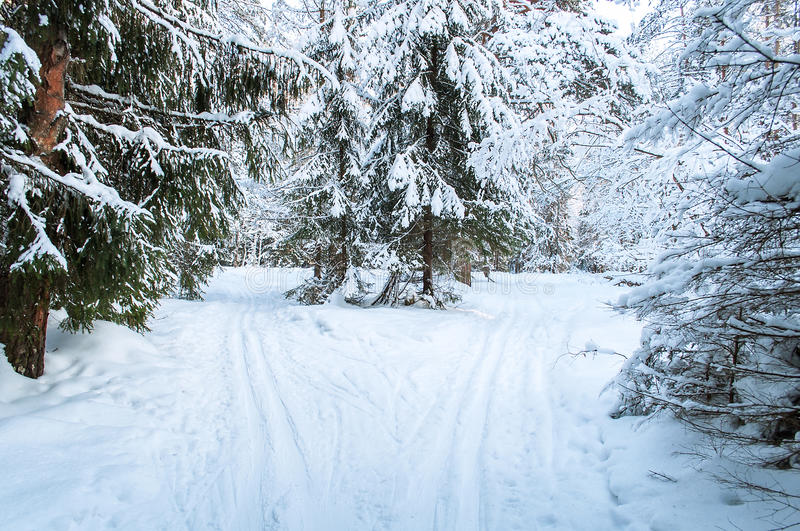Download Landscape Of Winter Forest. Stock Photo - Image: 36977984