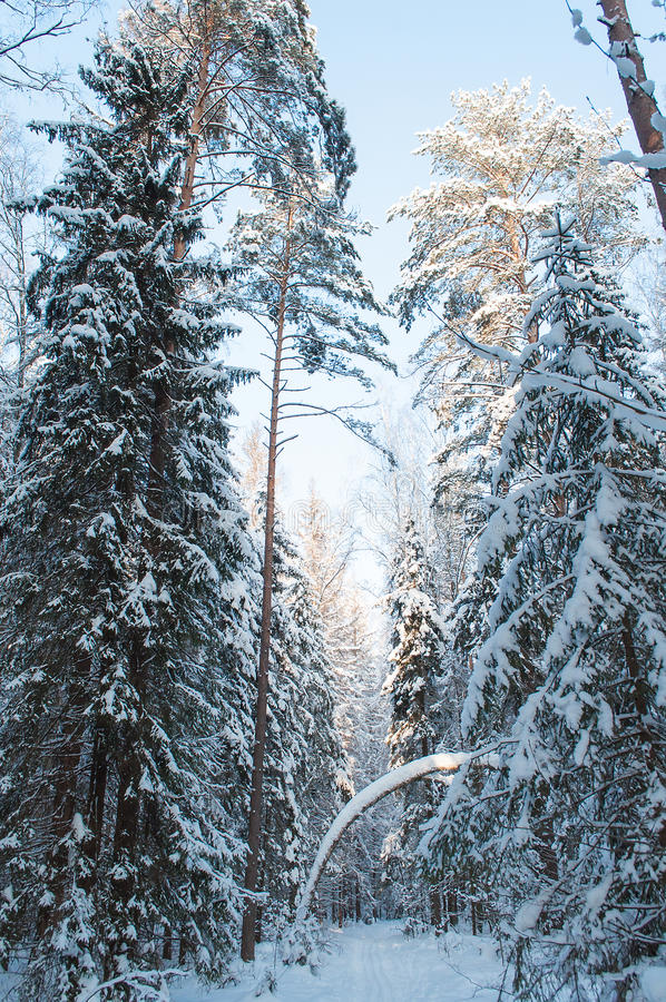 Download Landscape Of Winter Forest. Stock Photo - Image: 36978246