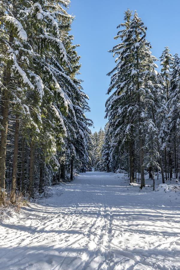 Winter forest and road with trees in snowfall royalty free stock photography