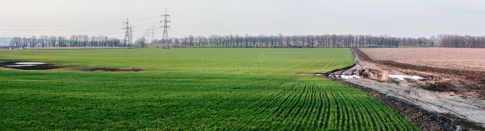 Landscape with winter wheat rye agricultural fields and dirty road -- spring landscape, panorama royalty free stock image