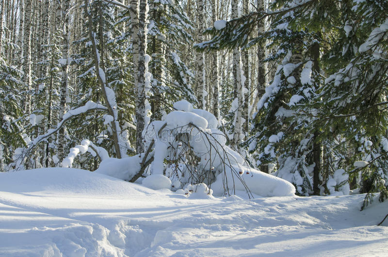 Landscape of winter in the wood stock photos