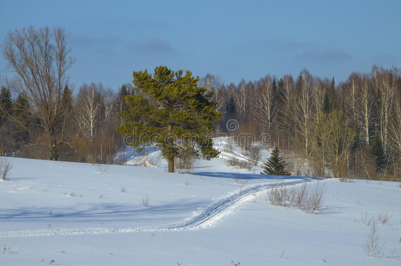 Landscape of the wood winter to Siberia royalty free stock images