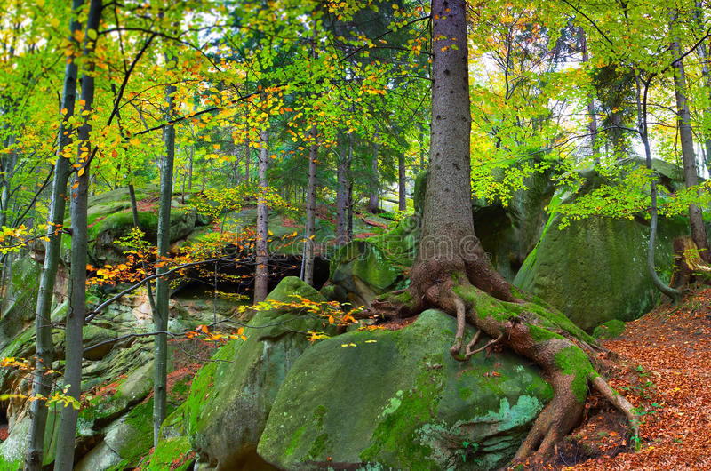 Landscape in the woods royalty free stock image